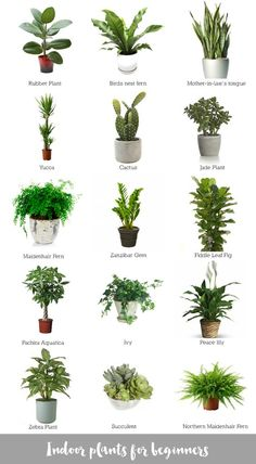 Good office plants cool best low light plants ideas on indoor plants low good office plants . Potted Plants, Garden Plants, Cactus Plants, Pots For Plants, Ikea Plants, Cactus Types, Indoor Flowering Plants, Types Of Succulents, Big Plants