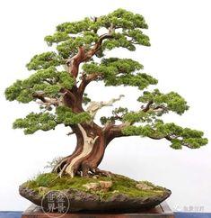 Bonsai Plants, Bonsai Garden, Potted Plants, Garden Plants, Bonsai Tree Care, Bonsai Trees, Bonsai Forest, Juniper Bonsai, Moss Garden