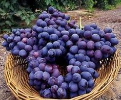 purple food photos - Google Search