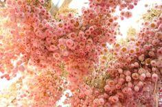 Pink flowers - Amsterdam Bloomenmarket- for overhead rose bush :) Pink Love, Pretty In Pink, Fresh Flowers, Pink Flowers, Amsterdam Flower Market, Simply Beautiful, Beautiful Flowers, Everything Pink, Flower Power