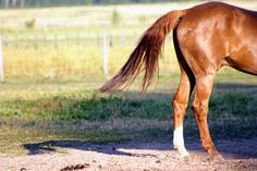 Grooming Horse Tails