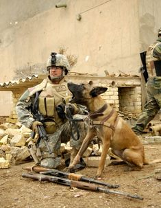 Military Working Dogs and their handlers in action. Military Working Dogs, Military Dogs, Police Dogs, Military Service, Berger Malinois, Game Mode, Belgium Malinois, Dog Soldiers, Loyal Dogs