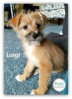 Pictures of Luigi a Terrier (Unknown Type, Medium) Mix for adoption in Plainfield, IL who needs a loving home.