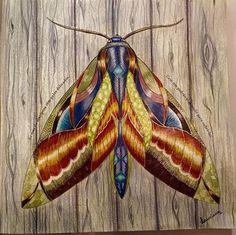 Reino Animal por Luciana Silveira - Inspirational Coloring Pages #inspiração #coloringbooks #livrosdecolorir #jardimsecreto #secretgarden #florestaencantada #enchantedforest #reinoanimal #animalkingdom #adultcoloring #milliemarotta
