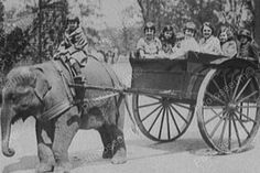 An poster sized print, approx (other products available) - Sheba the elephant pulling children in a cart at Detroit Zoo, Michigan, USA Date: circa 1920 - Image supplied by Mary Evans Prints Online - Poster printed in the USA Fine Art Prints, Framed Prints, Canvas Prints, Old Photos, Vintage Photos, Vintage Pins, Vintage Photographs, Detroit Zoo, Old Wagons