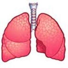 ¿SABÍAS QUE...?  El pulmón derecho es más grande que el izquierdo; este debe dejar espacio al corazón.