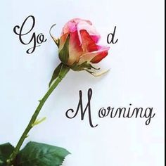 Good Morning, Jesus Loves You. Good Morning Tuesday, Morning Msg, Good Morning World, Good Afternoon, Good Morning Good Night, Happy Sunday, Afternoon Quotes, Morning Love Quotes, Morning Greetings Quotes
