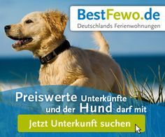 Holiday with the dog - Beste Reisetipps 2019 Nordic Interior, Trekking, Dog Love, Animals And Pets, Photo Editing, Holiday, Dogs, Travel, Kegel