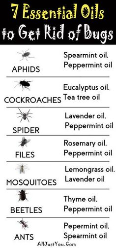 7 Essential Oils to Get Rid of Bugs at Home #health #beauty #Bugs #home #garden #remedy