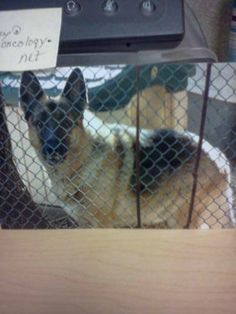 Terminally ill cancer patient hopes to see German shepherd placed in safe home