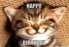 Happy birthday funny cats, cat birthday memes, cat birthday wishes, happy birthday coffee Cat Birthday Memes, Happy Birthday Funny Cats, Funny Happy Birthday Wishes, Happy Birthday Mom, Birthday Sayings, Birthday Ideas, Birthday Kitty, Happy Birthday Animals, Birthday Humorous