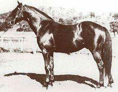 Radiam foaled 11/11/1918
