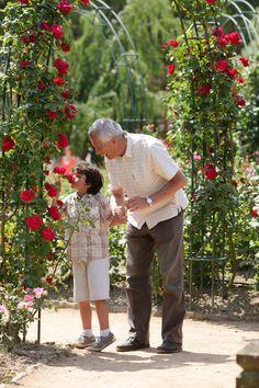 La roseraie - Puy du Fou  #rose #fleur #flower #jardin #garden #nature #parc