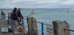 These sea anglers turn a blind eye to the 'No Fishing' sign on Weymouth pier on a summer day in the UK. They can expect to catch mackerel, pollack, garfish - and if they're really lucky, a bass.