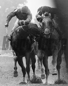 The Savage: 1980 Tremont Stakes with Great Prospector biting winner Golden Derby at Belmont Park. Photo by: Bob Coglianese