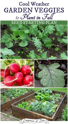 Grow a fall vegetable garden with this simple seed sowing plan. Print it out and grow!