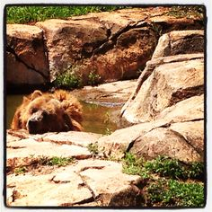 Pretoria Zoo, South Africa #yogibear