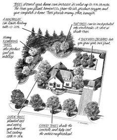 where to plant trees around house