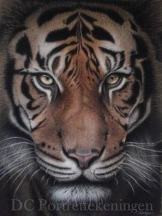 """Tiger"" realistic portrait drawing made with pastelpencils"