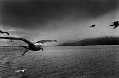 Josef Koudelka (b. January is a Czech photographer. Josef Koudelka was born in 1938 in Boskovice, Moravia. He began photogr. Walker Evans, Tim Walker, Herbert List, Lee Friedlander, Karl Blossfeldt, Stephen Shore, August Sander, Dora Maar, Robert Frank