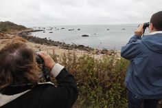 In this Oct. 6, 2010 file photo, people on a tour of Plum Island, N.Y., off the coast of Long Island, watch seals relaxing on the rocky shore.