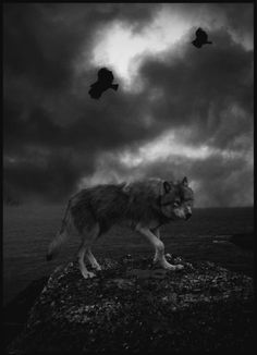 I'm not into spiritual stuff, but wolves and ravens, seperate or together, are awesome.