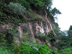 Bosque Atlántico del Alto Paraná (BAAPA)  fuente: parquesnacionalesdelparaguay.com