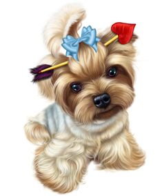 chiens,dog,puppies,wallpapers #yorkshireterrier