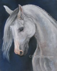 Equine Art  White Arabian Horse by Della Burgus, painting by artist Art Helping Animals