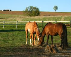 ~Country Life~ grew up in the country. Dad loved his horses and he taught us how to ride : )