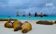 Galapagos Islands Vacation Packages   ... to Galapagos - Galapagos Islands Cruises, Tours, Hotels and Travel