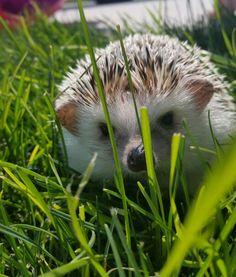 Hedgehog photoshoot for Henry