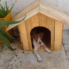 Recycled Dog House