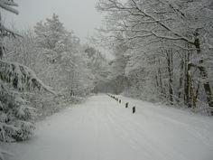 Bospad Uffelte in de sneeuw.