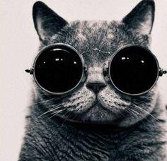 Cat ~ Sunglasses