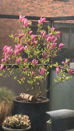 Magnolia Spring 2017  Grada van Welzen