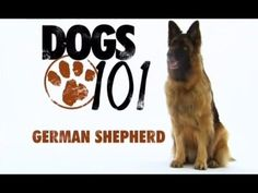 furry friends high quality four-legged friend Pet Dogs, Dogs And Puppies, Dog Cat, Pets, Doggies, German Shepherd Breeds, German Shepherds, Dogs 101, Cat Face