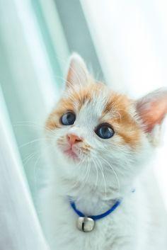 """ラブリー-KittyCats、catsbeaversandducks: """"あなたは私かどうかを尋ねてもらえますか..."""