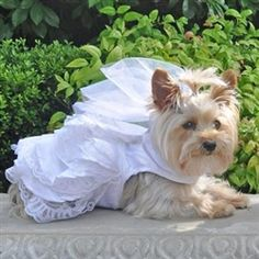 Wedding Gown With Veil & Leash - Apparel - Dresses Posh Puppy Boutique