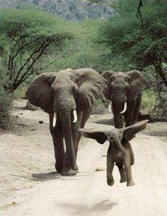 Baby elephant!!!   :)