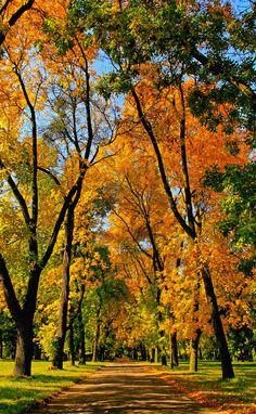 Autumn alley, Lodz | Poland(by Gwynbleid)