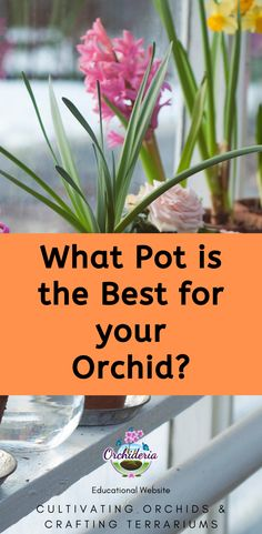 Fact or Myth: Orchids Prefer Clear Plastic Pots to Grow — Orchideria Orchids In Water, Indoor Orchids, Orchid Plant Care, Orchid Plants, Plastic Food Containers, Plastic Pots, Orchid Roots, Build A Greenhouse, Growing Orchids