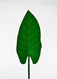 Feeling Tropical - Τροπικό Φύλλο PVC Πράσινο σκούρο 63x21cm Plant Leaves, Plants, Plant, Planets