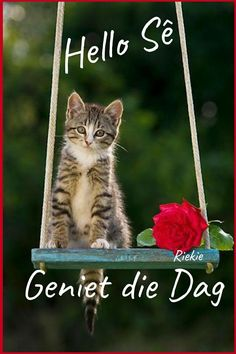Good Morning Wishes, Good Morning Quotes, Text Over Photo, Lekker Dag, Goeie Nag, Goeie More, Afrikaans Quotes, Cat Design, Cat Quotes