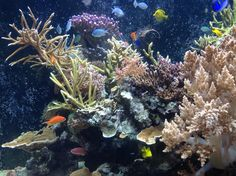 @lesleymckie - Amazing #coralreefs aquarium @NHM_London. But, for how much longer in our oceans?