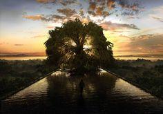 The Fountain Hugh Jackman and Rachel Weisz The Fountain Movie, Tree Of Life Symbol, Rachel Weisz, Plantation, Film Stills, Fantasy World, Cinematography, Paths, Sunset