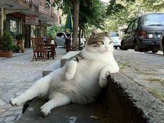 Esses gatinhos desengonçados fazem muito sucesso com os internautas http://r7.com/SAgm