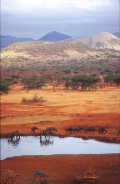 Ecco il parco nazionale del Tsavo, in Kenya, il più grande del Paese. Pensate che assieme ai vicini parco delle colline Chyulu, la riserva naturale di Ngai Ndethia e la riserva naturale di South Kitui, occupa una superficie pari a quella della Toscana! Sapete che cosa sono quei puntini laggiù? Cespugli? Uccelli? No, centinaia di bufali!