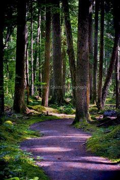 Forest Trail Print, 8 X 12, Home Decor, Fine Art Photography, federation forest, Washington State, green, magical,. $27.00 USD, via Etsy.
