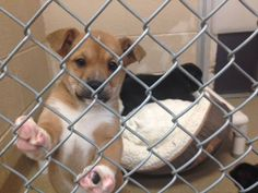 MERCER COUNTY, PA ANIMAL SHELTER>>>>CODE RED URGENT!!!! 50 DOGS & PUPPIES NEED YOUR HELP!!! OUT OF TIME MONDAY>>>DEC 15TH!!! PLEASE RESCUE ASAP!!! https://www.facebook.com/59news/photos/a.500356767753.310003.279356537753/10152979640572754/?type=1&theater PLEASE REPIN!!!!